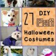 27 DIY Halloween Costumes for Pets