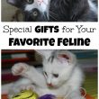 Purr-fectly Special Gifts For Your Favorite Feline